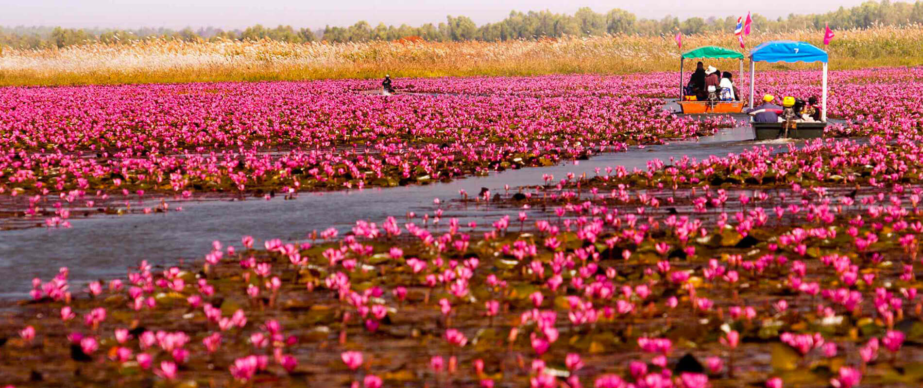 Nong Han Kumphawapi, il lago ricoperto dai fiori di loto
