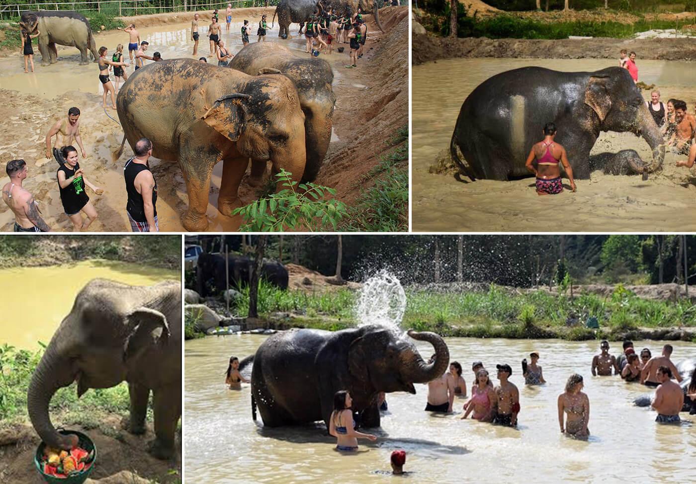 Elephant-Jungle-Sanctuary-Phuket-3