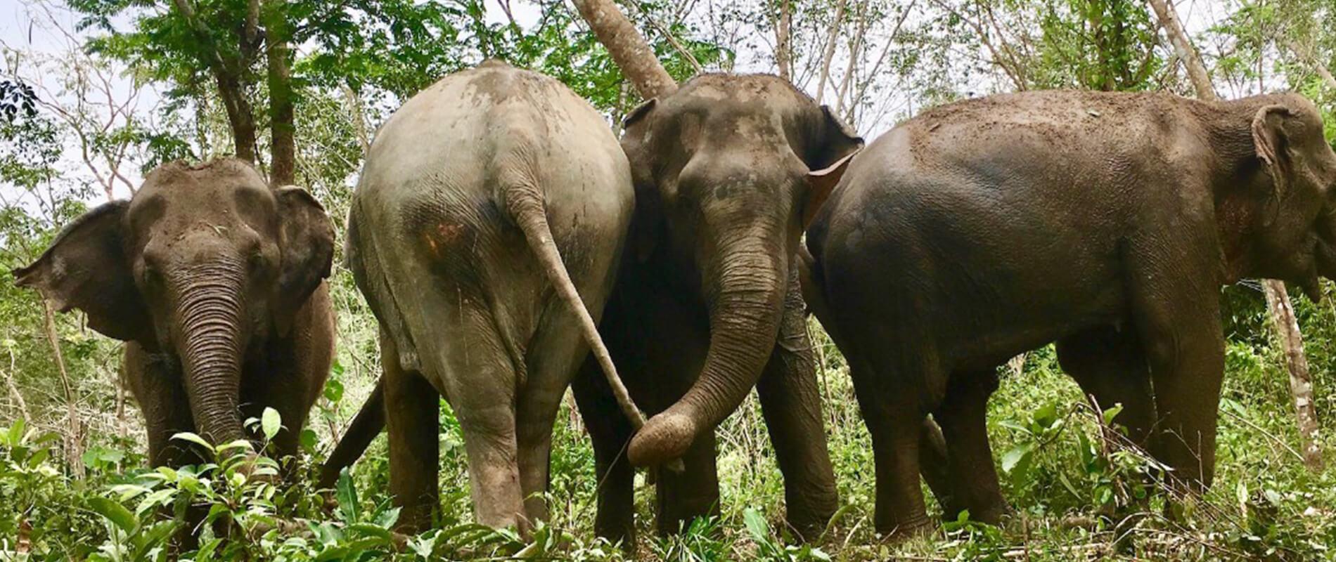 Elephant Jungle Sanctuary, l'oasi felice degli elefanti